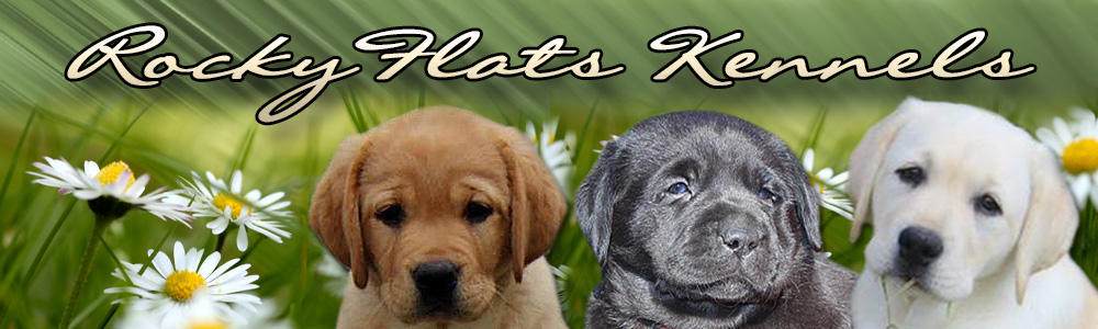 Rocky Flats Kennels,located in Eastern Tennessee, is a selective breeding kennel. We specialize in breeding English Standard AKC Registered Labrador Retrievers in Yellow, Black and Fox Red